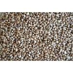 Konopné semínko neloupané 500g
